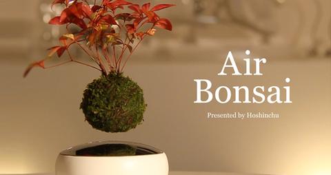 coolest standing desk plants